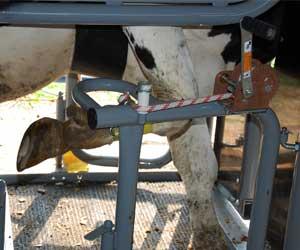 Zimmerman Cattle Control Hoof Care Chute Model Hcc2008
