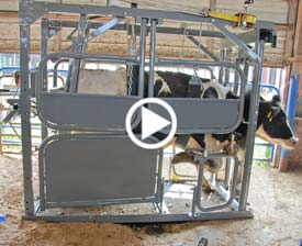 Hoof and Vet Care Chute Image and Video Link