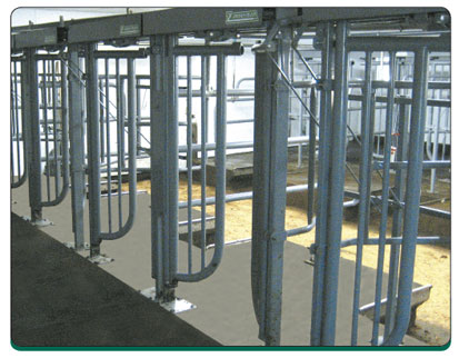 Zimmerman Cattle Control Milking Parlor Dairy Barn